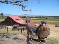 Hawks_coyne_wide
